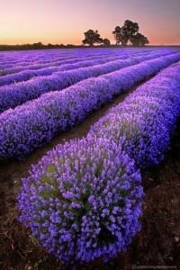 Fighting Seasonal Allergies with Essential Oils img 1